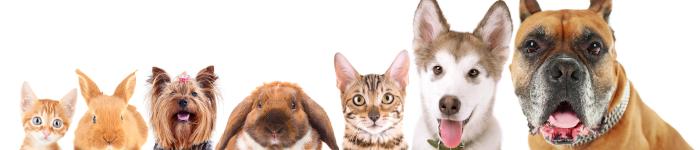 dyr-rabattkode